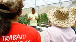 Abasteciendo al pueblo Ejecutivo sembrará más de 2 millones de hectáreas de alimentos 260x146 - ¡Abasteciendo al pueblo! Ejecutivo sembrará más de 2 millones de hectáreas de alimentos