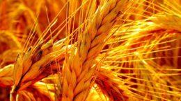 Más de 320 mil toneladas de trigo ingresaron al país desde enero 260x146 - Más de 320 mil toneladas de trigo ingresaron al país desde enero