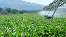 Precios mundiales de alimentos bajaron en marzo 260x146 - Precios mundiales de alimentos bajaron en marzo