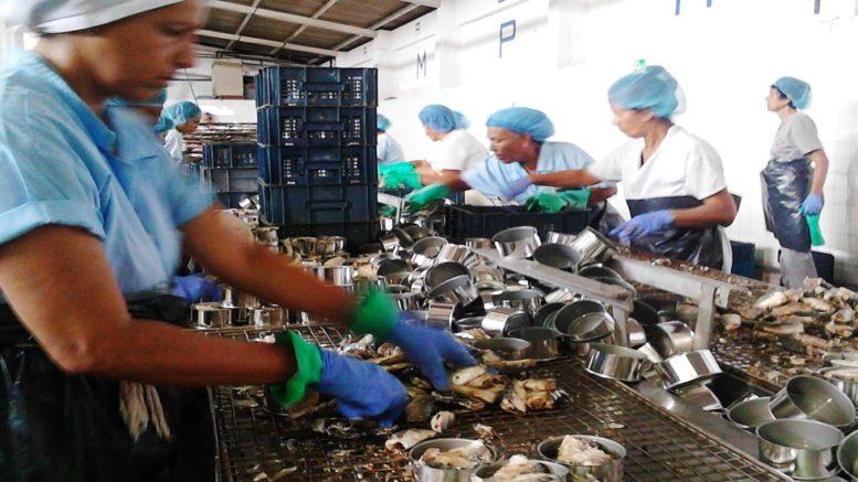 La Gaviota prevé producir 90.000 cajas de productos del mar 777x437 - La Gaviota prevé producir 90.000 cajas de productos del mar