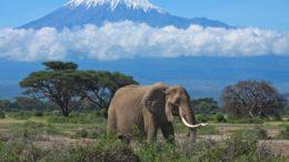 La astronómica cifra que provee el turismo a África 260x146 - La astronómica cifra que provee el turismo a África