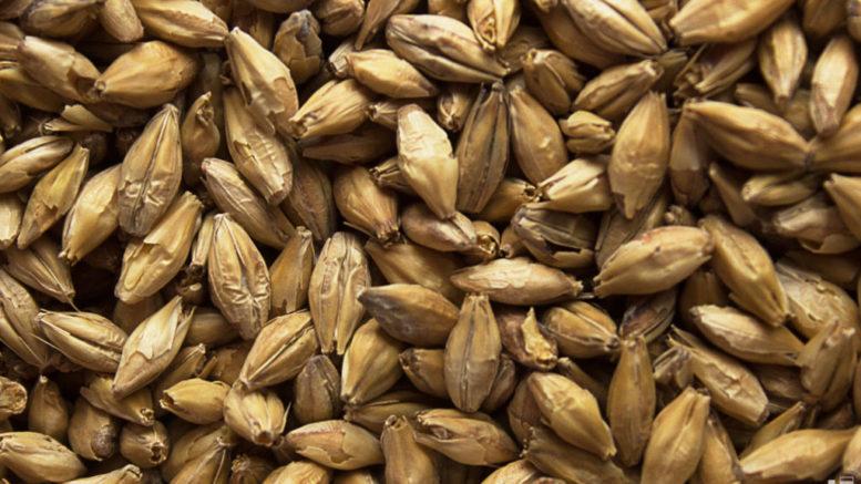 6 mil 900 toneladas de cebada malteada llegaron a Maracaibo 777x437 - 6 mil 900 toneladas de cebada malteada llegaron a Maracaibo