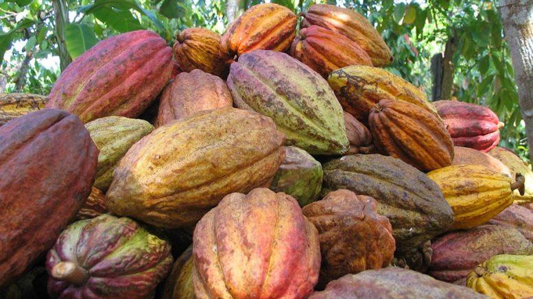 Cacao y madera venezolana partieron a Japón China y República Dominicana 777x437 - Cacao y madera venezolana partieron a Japón, China y República Dominicana