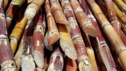 Crearán plan especial para incrementar producción de Azúcar 260x146 - Crearán plan especial para incrementar producción de Azúcar