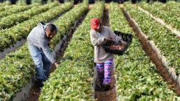El Plan de EEUU para los agricultores ante una salida del TLCAN 260x146 - El Plan de EEUU para los agricultores ante una salida del TLCAN