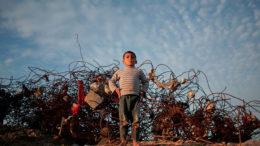 La petición de Israel para oxigenar la Franja de Gaza 260x146 - La petición de Israel para oxigenar la Franja de Gaza