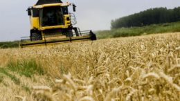 Rusia exportará entre 50 y 52 millones de toneladas de cereales este año agrícola 260x146 - Rusia exportará entre 50 y 52 millones de toneladas de cereales este año agrícola