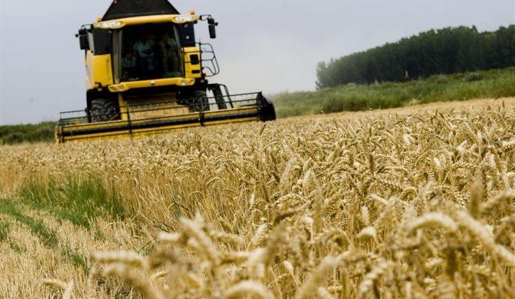 Rusia exportará entre 50 y 52 millones de toneladas de cereales este año agrícola 752x437 - Rusia exportará entre 50 y 52 millones de toneladas de cereales este año agrícola
